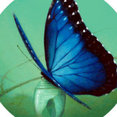 Metamorphosis's profile photo