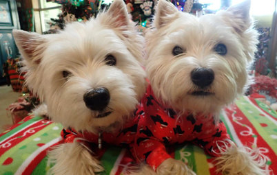 Show Us Your Christmas-Loving Pets!
