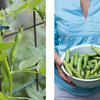 Summer Crops: How to Grow Beans