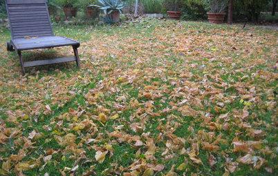 Pregunta al experto: Cómo cuidar (y disfrutar) el jardín en octubre