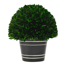 Ball Preserved Boxwood Topiary Planter