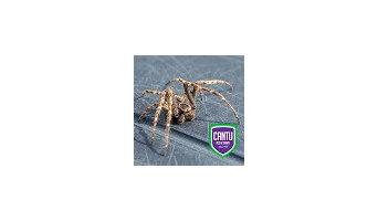 Cantu Pest & Termite