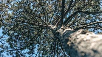 BAC Trees
