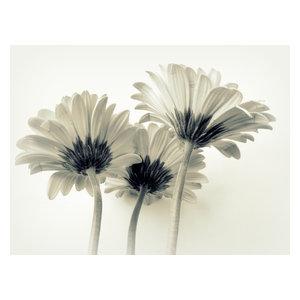 """Pixtury """"Evanescenza"""" Photo Print, Canvas, 30x40 cm"""