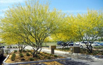 Southwest Gardener's May Checklist