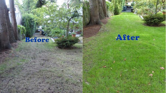 Before And After Thatching and Aerating