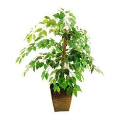 Mini Ficus Tree, Embossed Metal Container With Faux Dirt