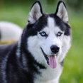 Huskies Remodeling's profile photo