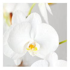 White Flower. Square Acrylic Print