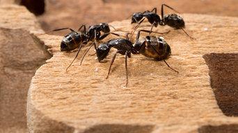 Pest Control Belair