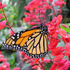 A Wing and a Prayer: Create a Heavenly Home for Butterflies
