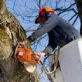 Airborne Tree Service & Relandscaping's profile photo