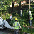 Fair Tree Services Stump Removal and Landscaping's profile photo