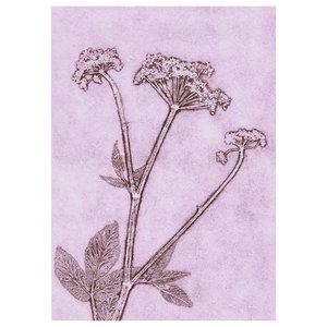 """""""Ground Elder"""" Paper Print, 50x70 cm"""