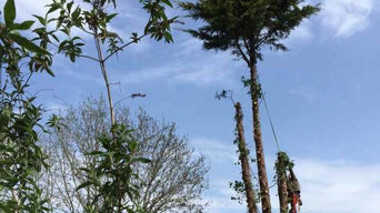 Our Tree Surgery Image Gallery