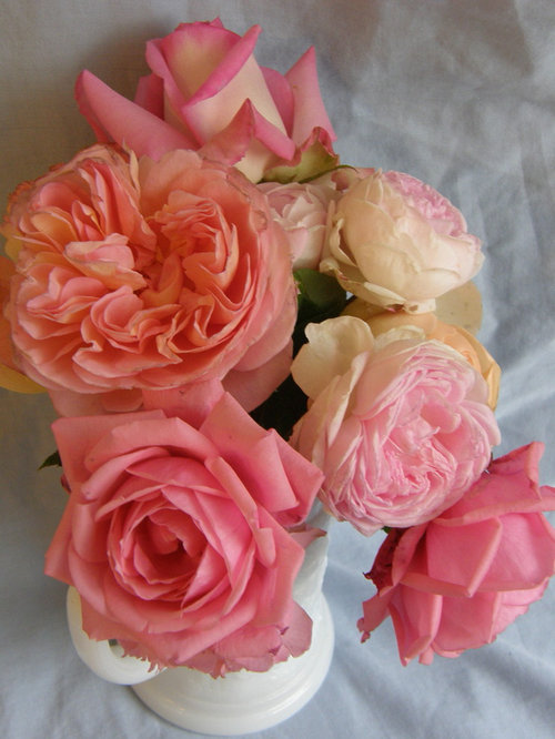 2c379aa2568a Worthy roses that give, useful products & recipes for health & sleep