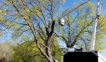 Mel's Tree Service and Maintenance