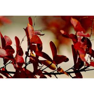 "Pixtury ""Autumn Butterflies"" Photo Print, Aluminium, 30x45 cm"