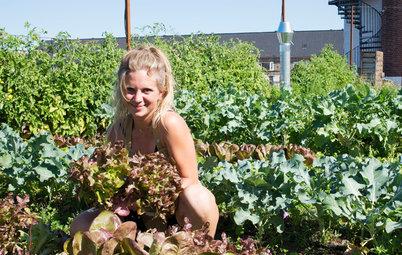 Odling: I Köpenhamn finns framtidens stadsträdgårdar på taken