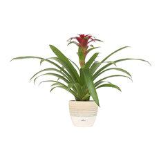 "Indoor Tabletop Plant, 6""  Scheurich Cream Home Decor Planter, Pink"