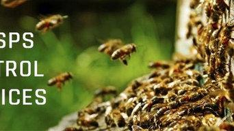 Wasp Pest Control Brisbane