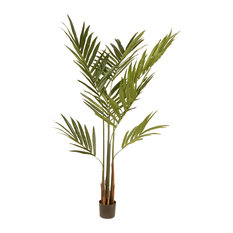5.8' Kentia Palm Potted Tree