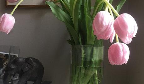 本と植物で楽しむ、シンプルな棚のディスプレイ
