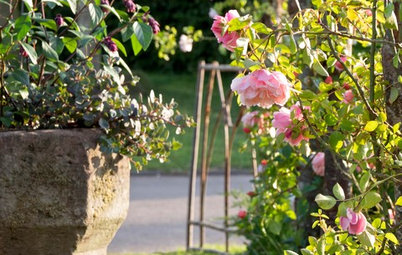 How to Deadhead Roses and Other Garden Favorites