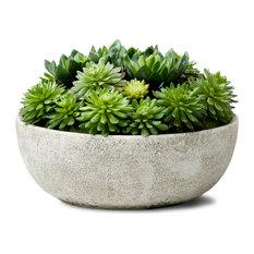 """Echeveria Succulent Mix In Bowl,  10""""x7"""""""