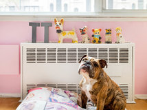 Luxury  Tater Tot Lives an Organized Life in NYC