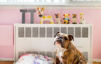 Pet's Place: Tater Tot Lives an Organized Life in NYC