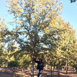 OSHAN TREES INC - CAMARILLO, CA, US 93010