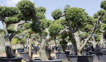 Plantas cultivo propio