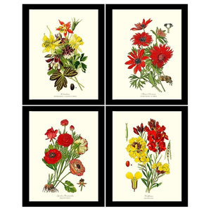 Garden Flower Botanical Print Set-4 Framed Antique Vintage Illustrations, Black