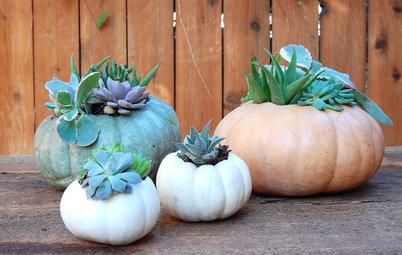 Fai da Te: Trasformare una Zucca in Vaso per Piantine Grasse