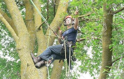 Личный опыт: Как я рубил гигантское дерево на участке
