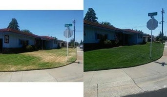 Lawn Painting Before and After Photos