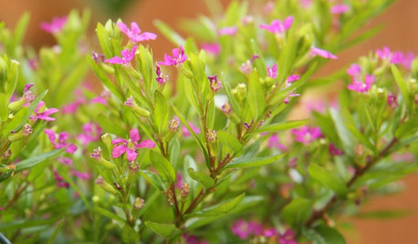 Plant This Flowering Ground Cover for Texture, Color and Wildlife