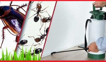 Spiders Control Brisbane
