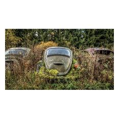 """The beetle"", Digital Photography"