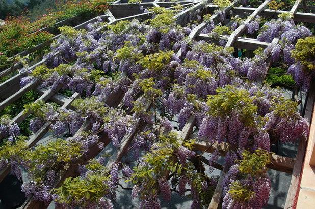 12 éléments qui font le charme des jardins de Provence