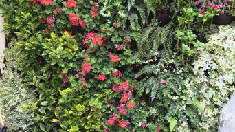 Residential outdoor living wall & balcony