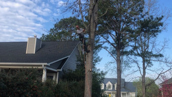 Tree Services in Wilmington, NC