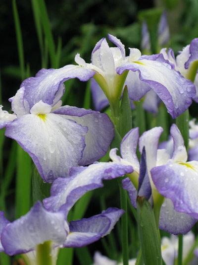 Traditional  by Ganim's Garden Center and Florist, LLC