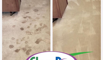 Carpet Cleaning - Pet Urine Stains