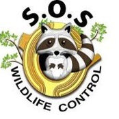 SOS Wildlife Control's photo