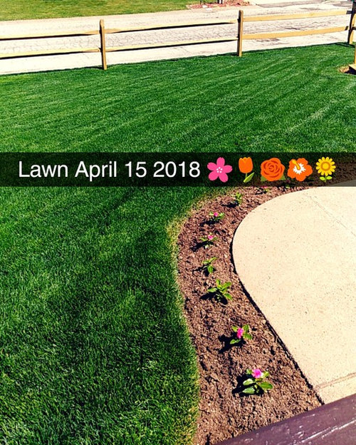 One Week After Lication Of Milorganite And A Lot Rain