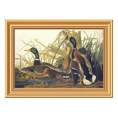 """""""Mallard Duck"""" Framed Canvas Giclee by John James Audubon, 22x16"""""""