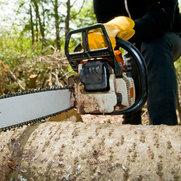 Foto de Crowley Tree Experts, Inc.