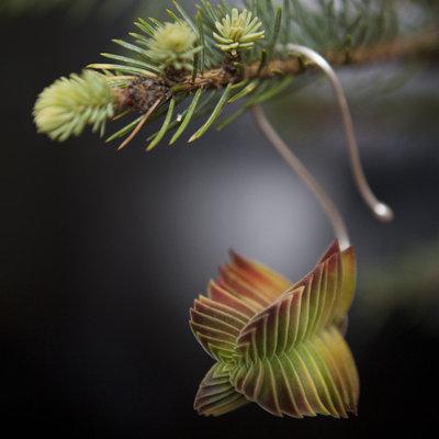 Modern Christmas Ornaments by Flora Grubb Gardens